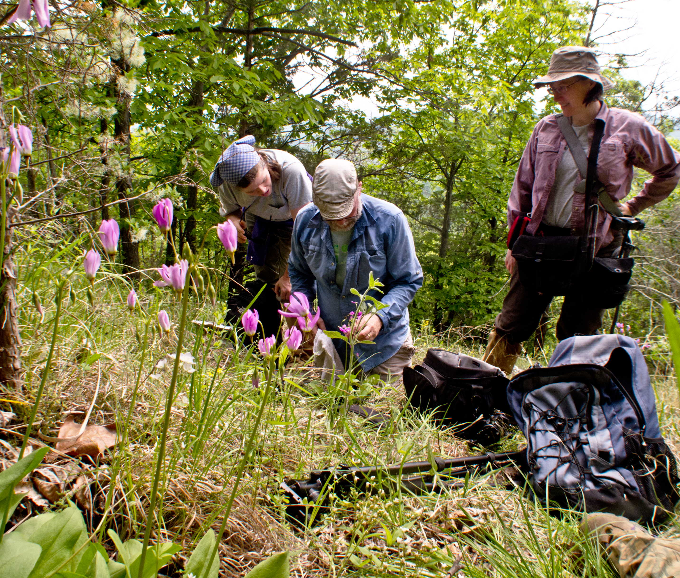 From Left:  Kristin Taverna, Gary Fleming, Karen Patterson taking a photo of Spring Forget-me-not, Myosotis verna